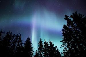 aurora dell'Alaska con alberi foto