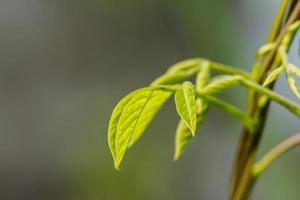 foglie di alberi foto