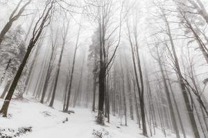 paesaggio invernale nella foresta con alberi di betulla e nebbia foto