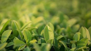 foglie verdi foto
