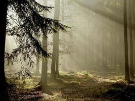 vista della foresta di conifere all'alba con la luce che splende attraverso