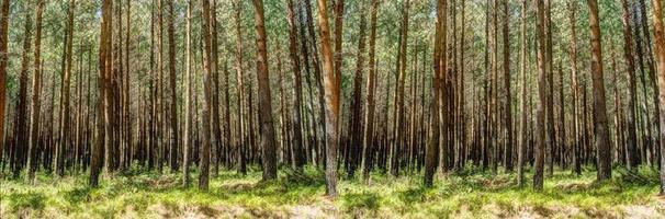 una ripresa panoramica di una foresta con molti alberi