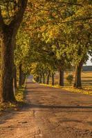 vicolo d'autunno foto