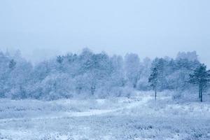 inverno in una foresta con la neve che cade a terra