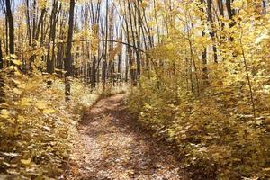 sentiero giallo