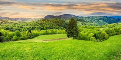 conifera in una valle panoramica all'alba foto