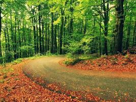 percorso curvo sotto alberi. pomeriggio nella foresta dopo una giornata di pioggia.