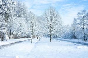 terra delle meraviglie invernali - nel parco foto