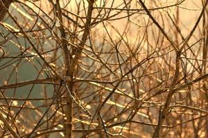 i rami degli alberi la luce del sole