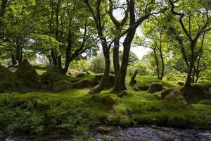 scenics a dartmoor
