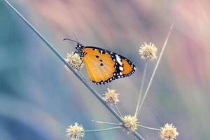 farfalla vintage e fiore in primavera foto