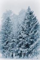 alberi foto