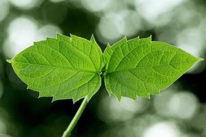 foglie verdi fresche