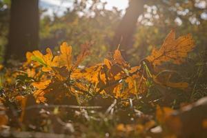 vista ravvicinata sul terreno coperto di foglie che cadono