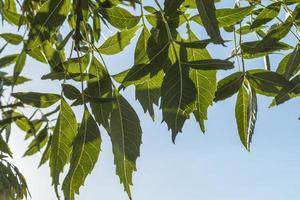 foglie in primo piano foto