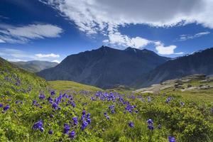 bellissimo paesaggio di montagna con fiori e cielo blu foto