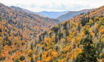 colori vibranti dell'autunno in smokies, tennessee