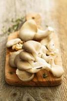 funghi ostrica foto