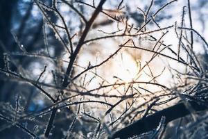 rami degli alberi in brina l'inverno su un sole sfocato