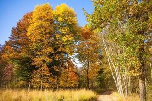 bellissimo autunno