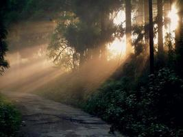 raggi di sole giallo che cadono sulla strada foto