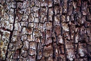 trama di corteccia d'albero foto