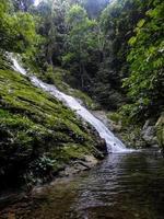 foresta pluviale di lupa masa nel borneo foto