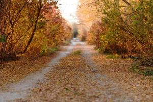 autunno parco stradale