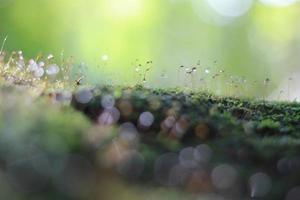 muschio nei boschi foto