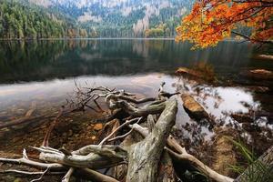 lago nero glaciale circondato dalle foreste foto