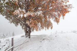 due stagioni - scena invernale e autunnale nel parco