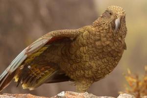 pappagallo su una gamba foto