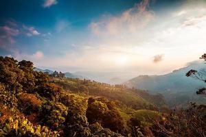 piantagioni di tè in india