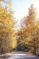 alberi autunnali