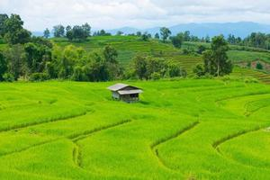 campo di riso con cottage in thailandia