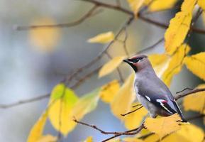 trama di sfondo ramo d'autunno foto