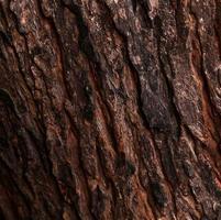 pelle del tronco d'albero