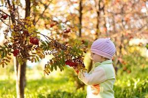 il piccolo bambino sta andando alla cenere di montagna nel parco