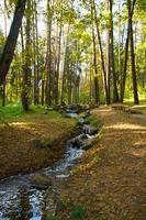 autunno d'oro sul lago.