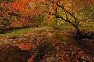montagne della pennsylvania foto