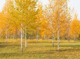 sfondo leggermente sfocato di alberi autunnali