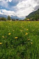 lago di brienz, regione di interlaken in svizzera foto