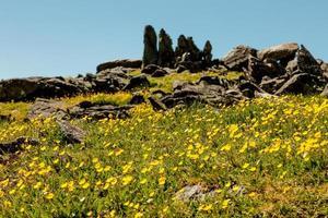 Wyoming giallo foto