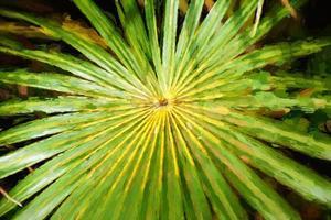 arte digitale, natura tropicale astratta: foglia di palma verde esotica