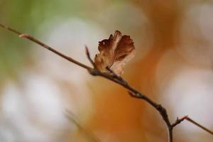 dettagli di foglie autunnali marroni, luce solare del bokeh foto