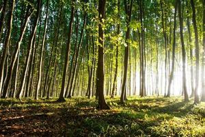 natura. bel tramonto nel bosco foto