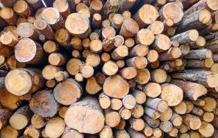 sfondo di tronchi di legno