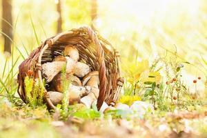 sfondo naturale con funghi foto