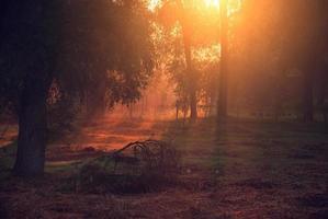luci del mattino foto