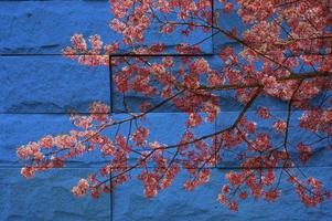 """murale """"fiore di sakura tailandese"""". il concetto di pittura su pietra"""